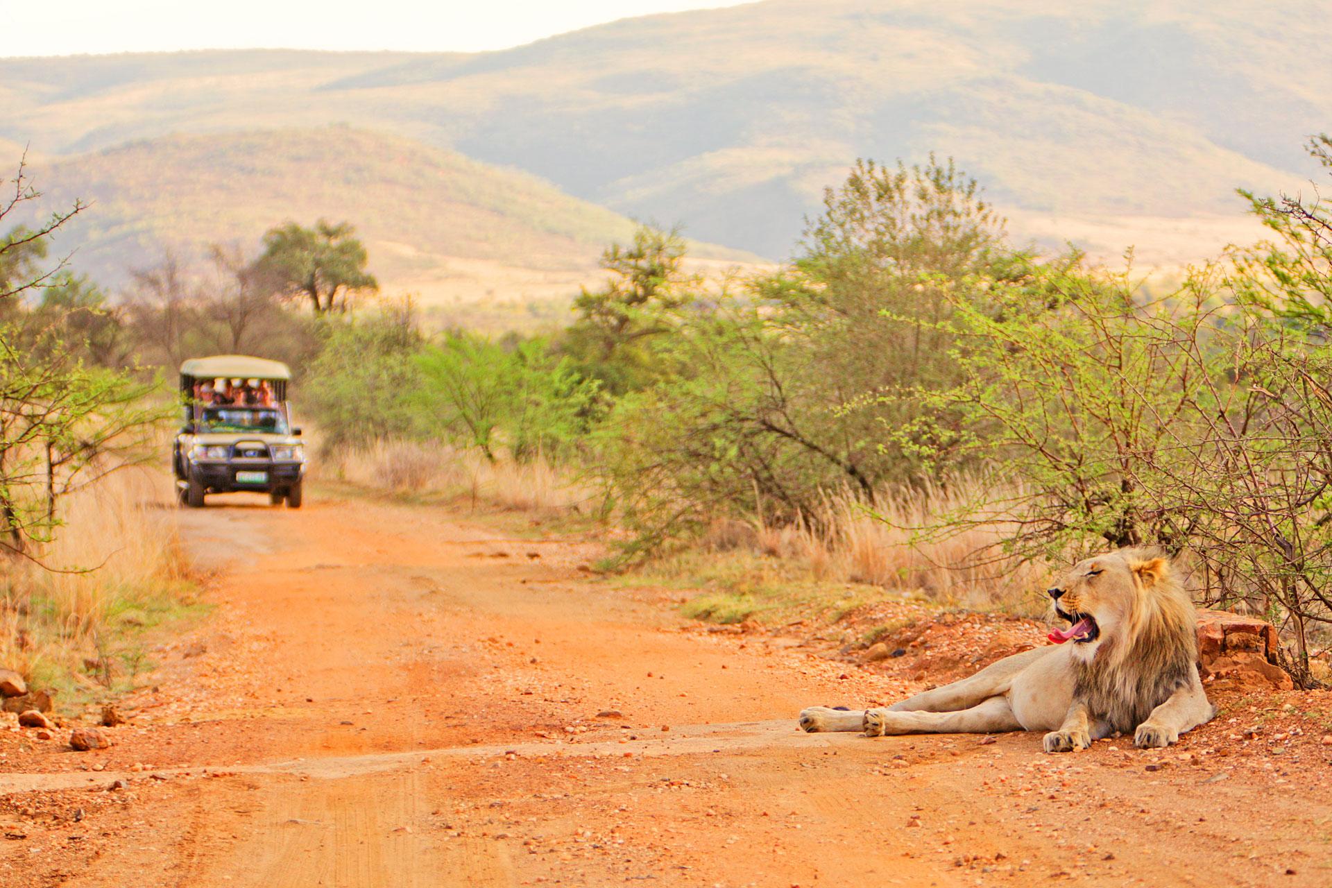 upstairs südafrika Incentive Löwe